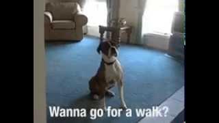 Вот почему я люблю собак
