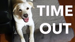 PUPPY IN TIME OUT! | Vlogmas Day 8 Thumbnail
