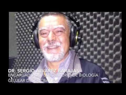PODCAST: LA APITOXINA (con el Dr. Sergio Álvarez Barajas)