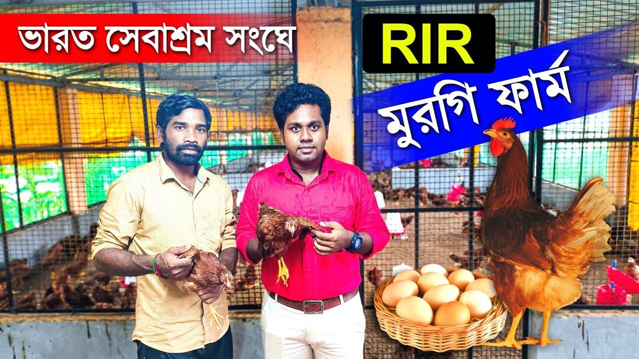 ভারত সেবাশ্রম সংঘে RIR MURGI FARM | RIR CHICKEN FARMING | Rhodes Island Red Chicken