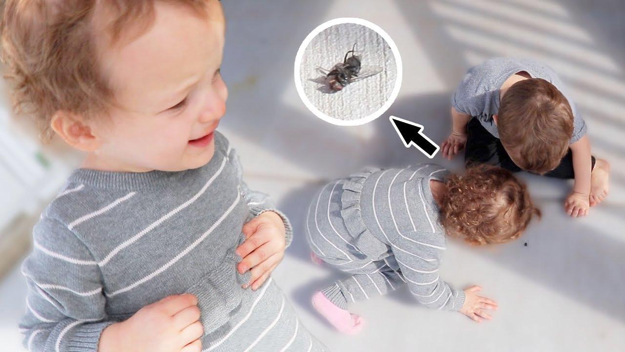 bug-freakout