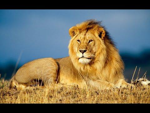 Safari in Africa | Natural Exploration™