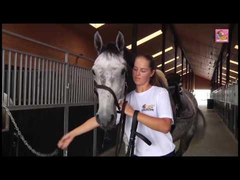 Jak osiodłać konia do jazdy