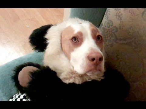 The Ultimate Dog Shaming : Cute Dog Maymo