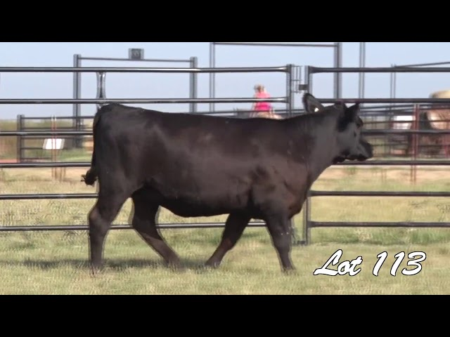 Pollard Farms Lot 113