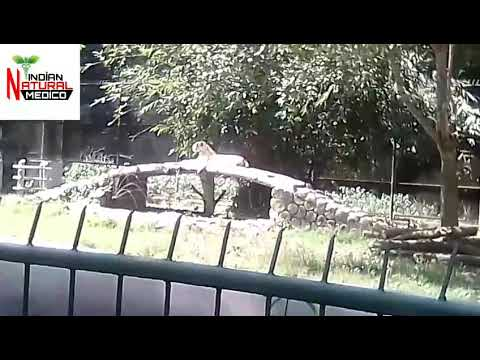 Zoo Video No.56