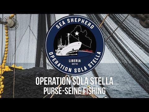 How Illegal Purse-Seine Fishing Decimates Marine Wildlife