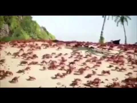 (EAR RAPE) Noisestorm- Crab Rave - YouTube