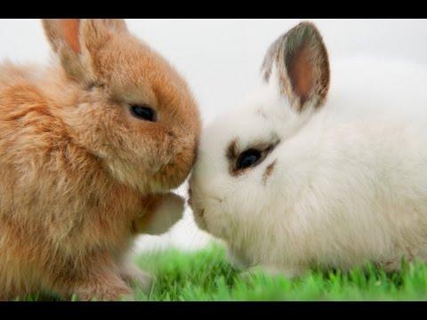 Кролики - как определить пол кролика