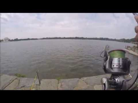 Awesome catfishing day at Tidal Basin, Washington DC