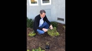 Pruning Coprosma