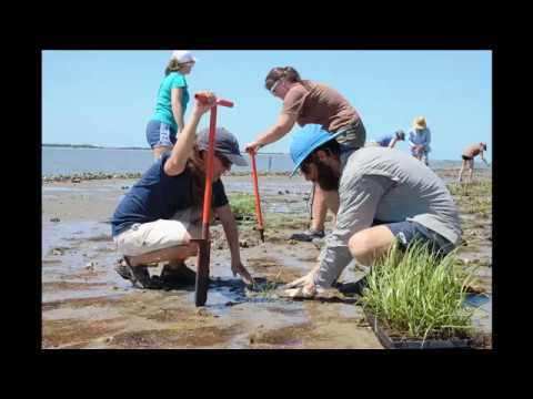 Living Shorelines: A Habitat-Friendly Alternative for Shorel
