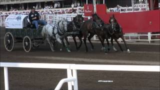 Chuckwagon Racing-Calgary Stampede 100 years ,, July 13, 2012