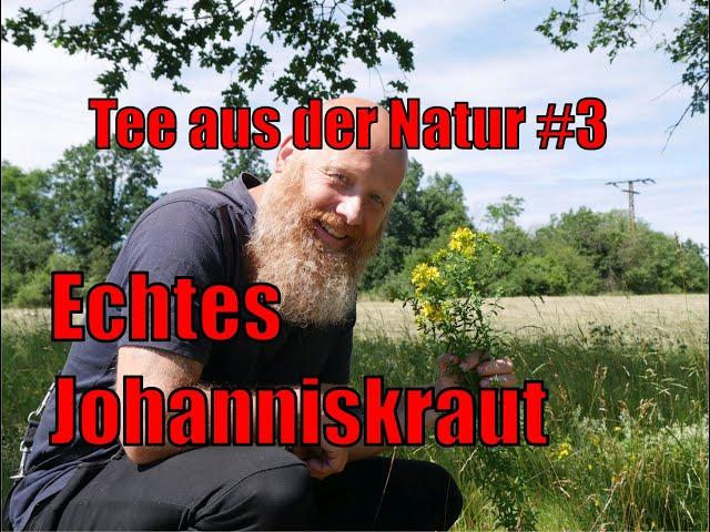 Tee aus der Natur #3 - Echtes Johanniskraut - Hypericum perforatum