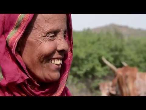 Trachoma: Defeating a Blinding Curse Trailer