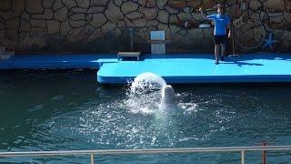Шоу дельфинов * Дельфинарий * Большой Утриш * Анапа