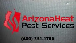 Mesa Bed Bug Treatment | Arizona Heat Pest Services