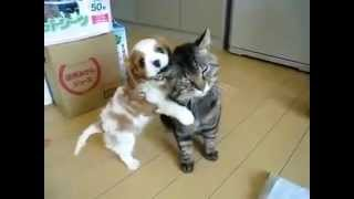 Смешное видео, кот(   cats, funny).mp4