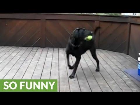Dream comes true for one lucky dog