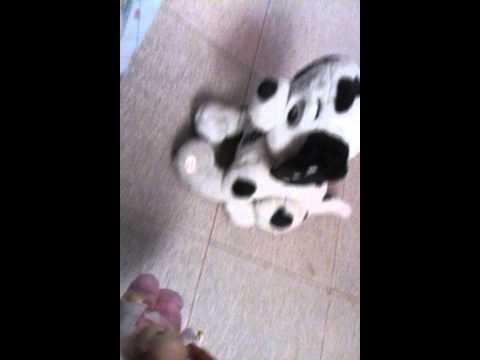 Soy perrito ??? :(