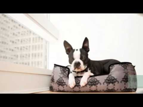 Precious Pets Paradise : Extra Large Dog Beds