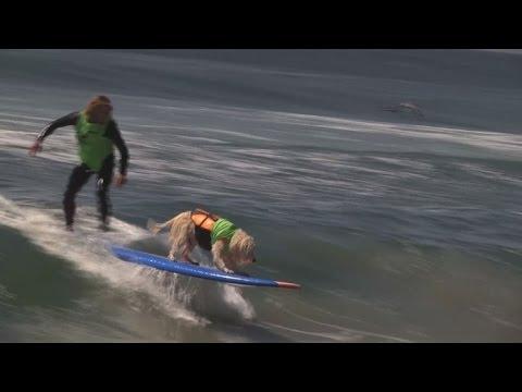 USA: compétition de surf canin en Californie