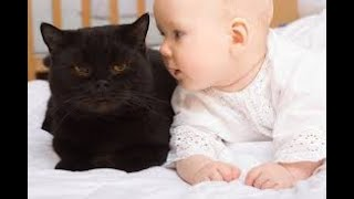 Baby and cat have fun #Baby and cat fails #funny