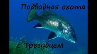 Подводная охота в Крыму на горбыля с трезубцем. Чёрное море Крым Гурзуф SJCam 5000+