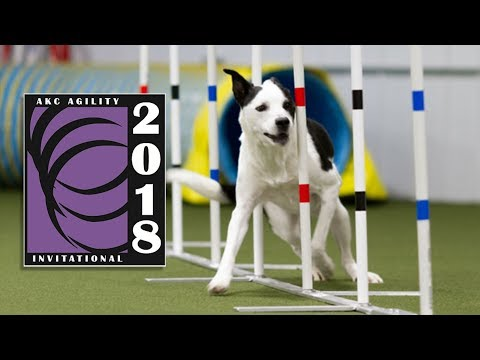 2018 AKC Agility Invitation Finals
