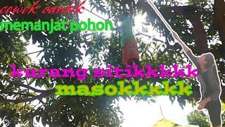 Gambar cover cewek memanjat pohon tertinggi..SPEKTAKULEERR!!!!!!