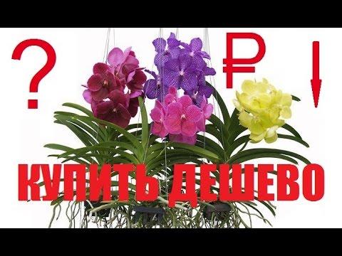 Где недорого купить орхидею в минске, подскажет relax. By. Орхидеи в горшках, садовые орхидеи. Адреса продавцов, стоимость цветов в каталоге, условия доставки.