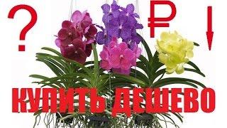 Как купить орхидею дешево (недорого)? Уцененные орхидеи. Орхидеи в домашних условиях(Как орхидею купить дешево (недорого)? Уцененные орхидеи. В этом видеоролике раскрывается данный вопрос...., 2016-03-14T07:11:34.000Z)
