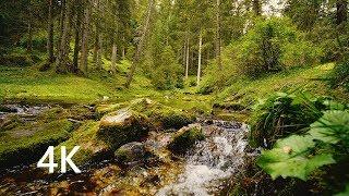 ساعتان من أصوات الغابة ، خرير المياه وزقزقة العصافير