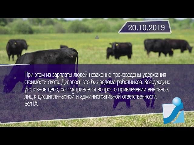 Новостная лента Телеканала Интекс 20.10.19.