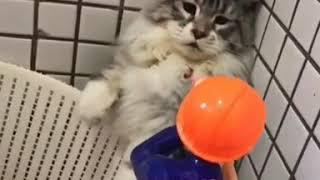Funny cat beats pubgtoy !!!!!