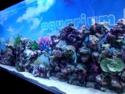 Aquariumindia. Chennai  My Marine Aquarium
