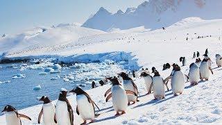 Gambar cover Il pinguino, la foca e altri animali dell'Antartide. Documentario.