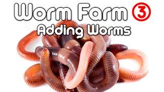 Worm Farm 3 - (Adding Worms)