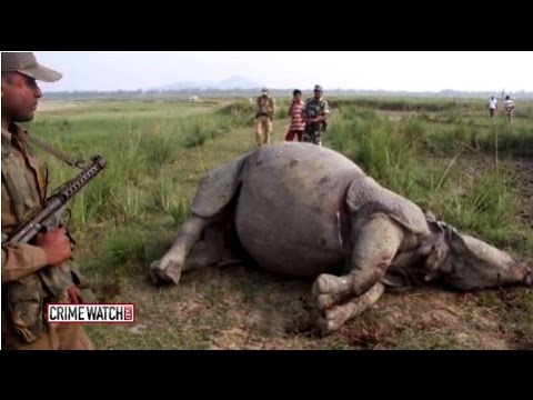 The Underground World of Wildlife Smuggling - Pt. 1 - Crime Watch Daily