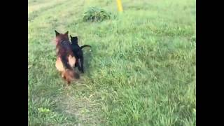 Собака Помагака