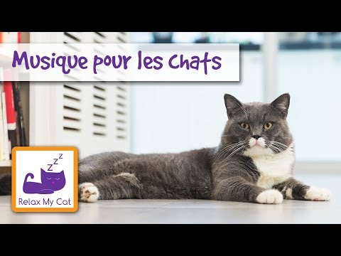 Relaxing Music for Cats: Pet Therapy Music - Music for Cats - Soothing