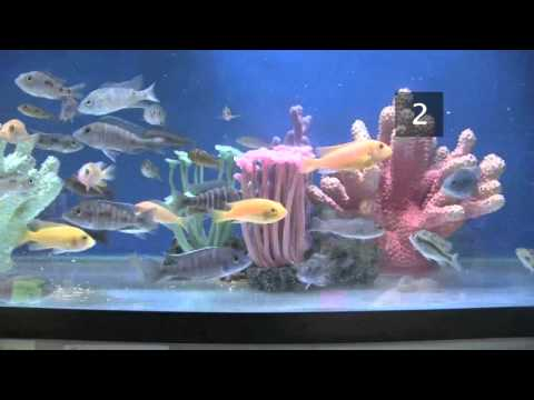 How To Choose Fish For A Tropical Fish Tank