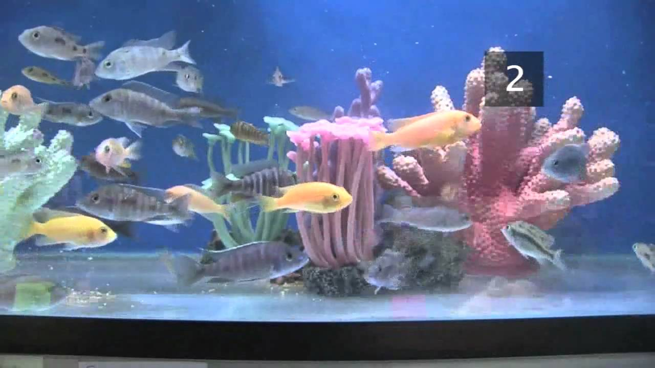 How to Choose Fish for a Freshwater Aquarium How to Choose Fish for a Freshwater Aquarium new pics