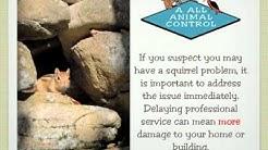 Squirrel Pest Control, Chandler, Phoenix, Mesa, Tempe, Gilbert, AZ