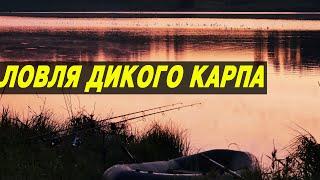 ЛОВЛЯ ДИКОГО КАРПА В КОРЯГАХ. ТРУДОВАЯ РЫБАЛКА ЛЕТОМ.
