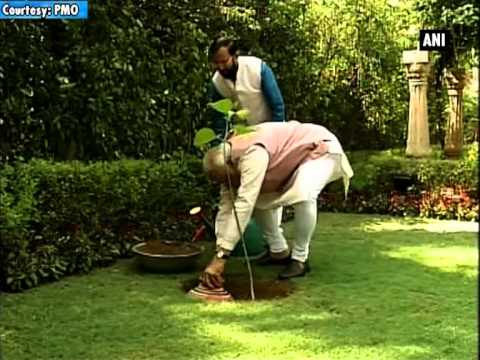 PM Modi plants 'Kadam tree sapling' on World Environment Day