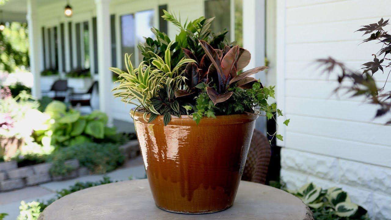 a-new-houseplant-arrangement-for-my-in-laws-garden-answer