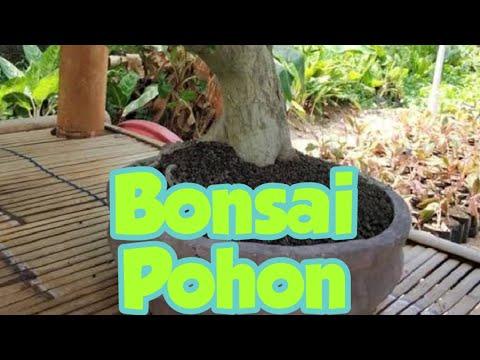 bonsai-tanaman-hias