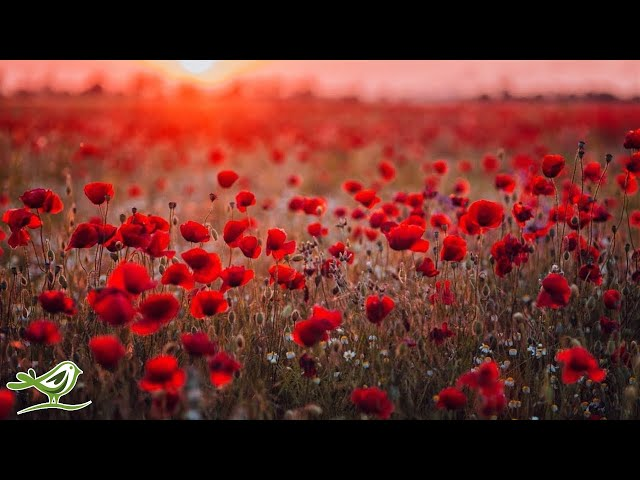 Beautiful Piano Music - Relaxing Music Romantic Music Sl