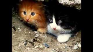 Roberto Carlos-O gato que esta triste no azul-traduçao